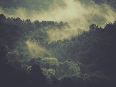L'écologie molle, développement durable ou mort lente ?